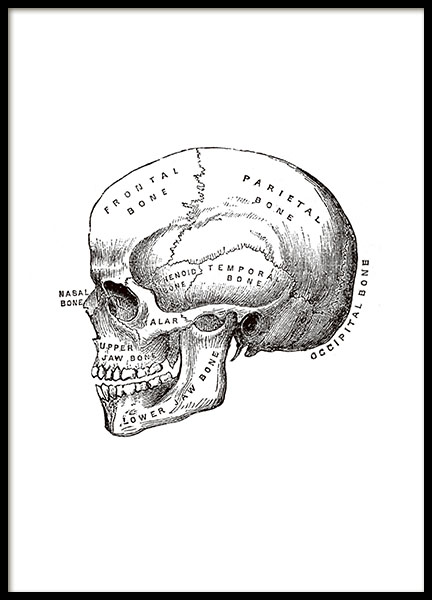Print with an illustration of a cranium or skull online