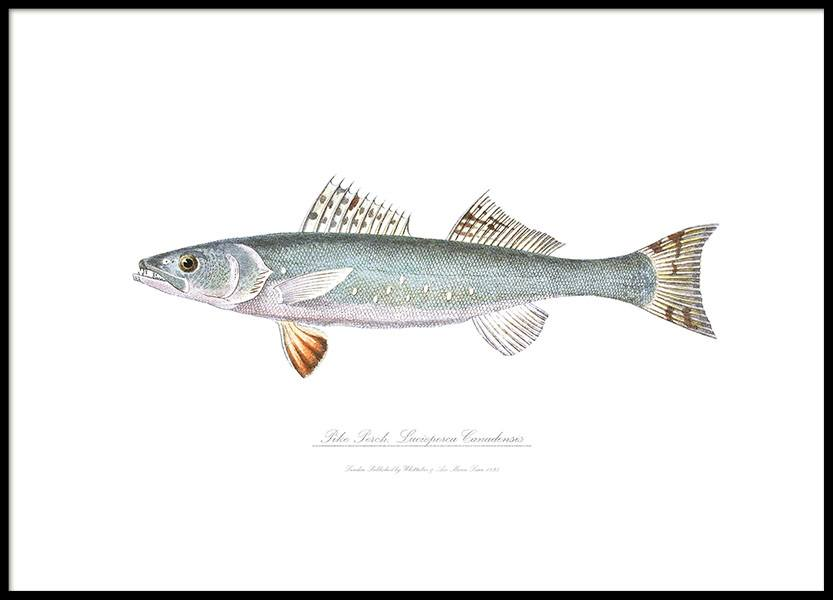 Prints with fish and stylish illustrations
