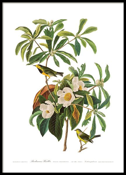 Poster with a botanical motif and birds, order prints online