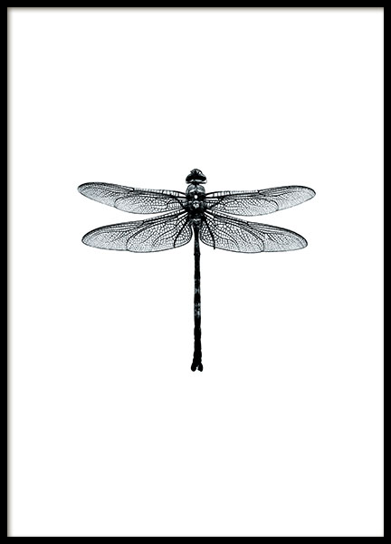 Posters online, stylish black and white prints with dragonflies