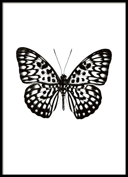 Posters and prints with butterflies and black and white posters for interior des