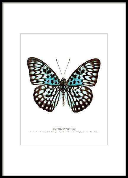 Prints and posters with butterflies, nice interior design details online