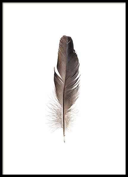 Feather posters online at Desenio