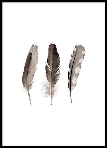 Print with feathers. Stylish photos on the wall