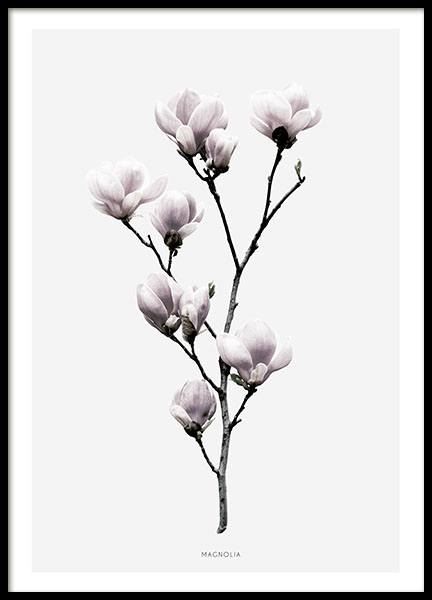 Poster with a magnolia, prints with flowers
