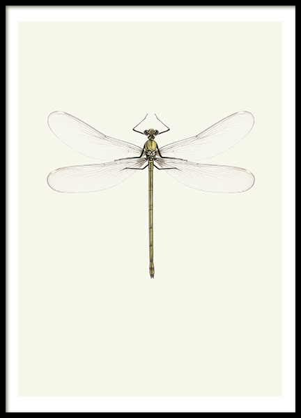 Prints for a vintage interior design with insects and dragonflies
