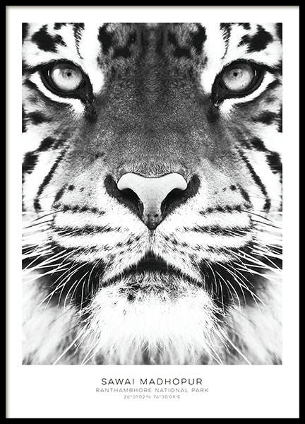 Black and white prints with photo art and tiger. Stylish prints online