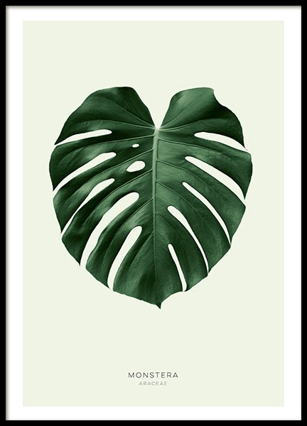Botanical posters and prints of monstera leaf, in colour