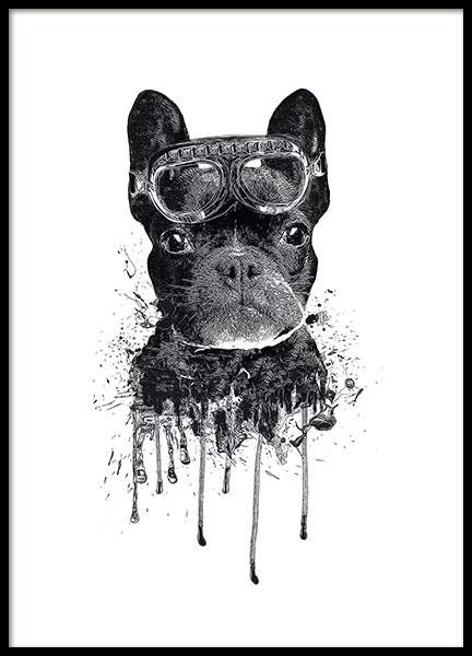 Children's posters of animals and dogs. Black and white poster of bulldog
