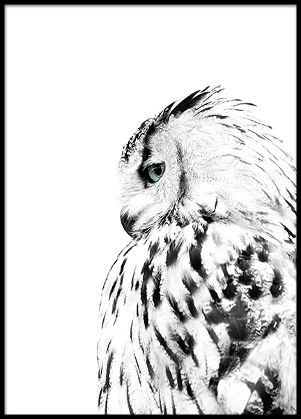 Photo poster with a owl to stylish decor