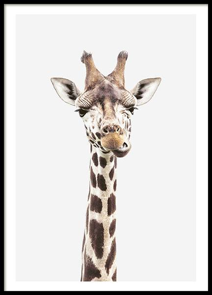 Baby Giraffe, Poster in the group Prints / Animals at Desenio AB (8358)