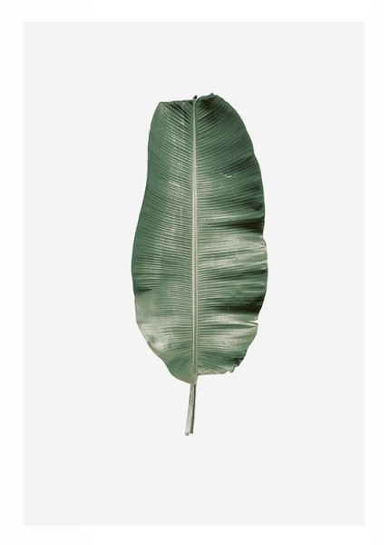 Banana Leaf, Poster in the group Prints / Floral at Desenio AB (8359)