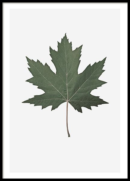 Maple Leaf, Poster in the group Prints / Floral at Desenio AB (8360)