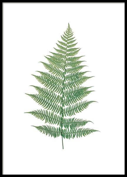 Fern Branch, Poster in the group Prints / Floral at Desenio AB (8404)