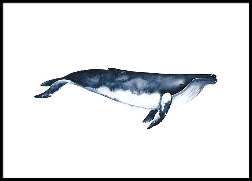 Humpback Whale, Poster in the group Prints / Illustrations at Desenio AB (8416)