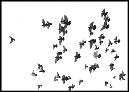 Flying Birds, Poster in the group Prints / Black & white at Desenio AB (8419)