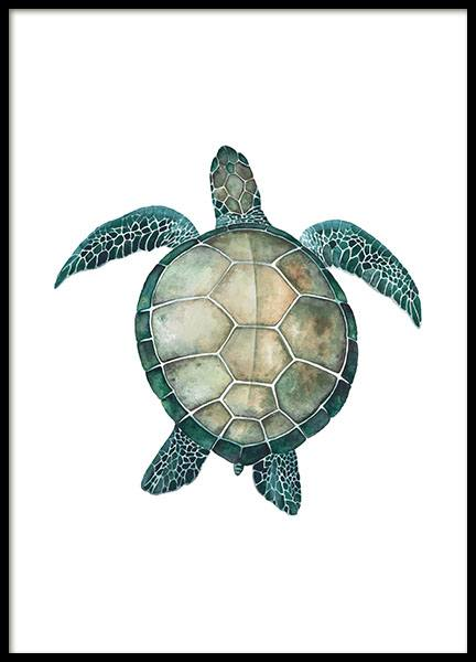 Sea Turtle, Poster in the group Prints / Animals at Desenio AB (8424)