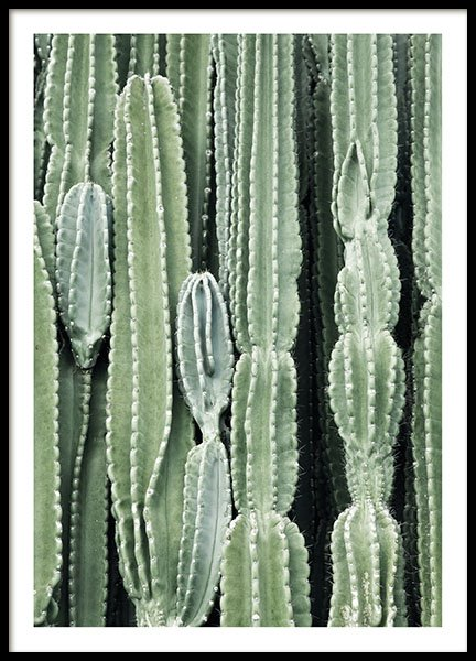Cactus, posters in the group Prints / Sizes / 40x50cm | 16x20 at Desenio AB (8539)