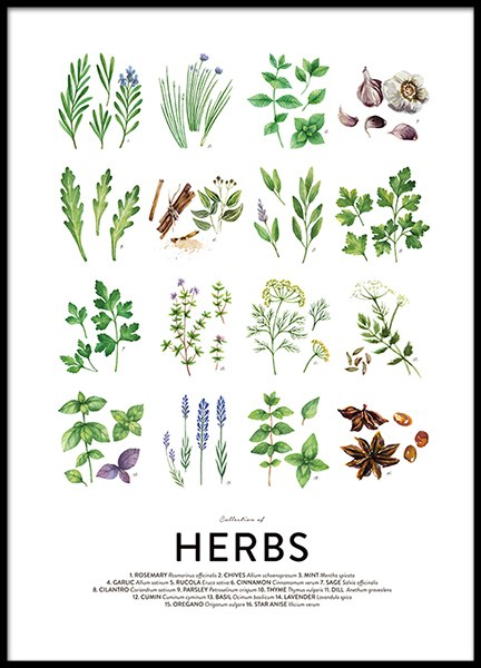 Culinary herbs, posters