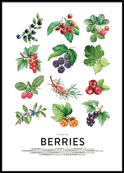Berries, Posters in the group Prints / Kitchen at Desenio AB (8591)