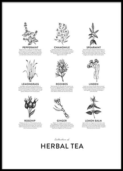Collection Of Herbal Tea, Posters in the group Prints / Kitchen at Desenio AB (8594)