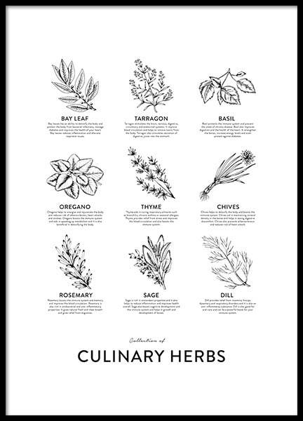 Collection Of Herbs, Posters in the group Prints / Kitchen at Desenio AB (8595)