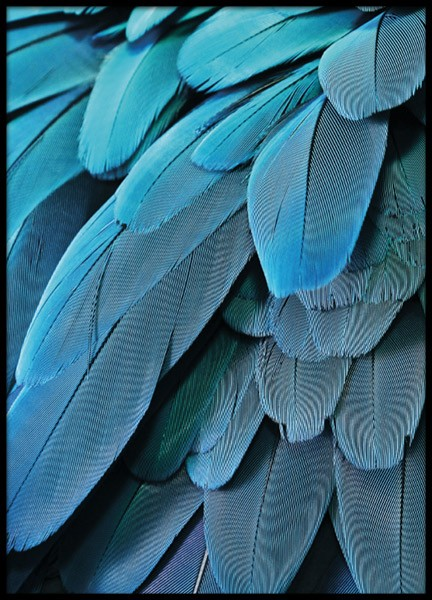 Petrol Feathers, Poster in the group Prints / Photographs at Desenio AB (8613)