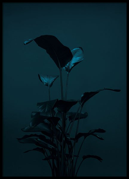 Black Plant, Poster in the group Prints / Sizes / 70x100cm | 28x39 at Desenio AB (8619)
