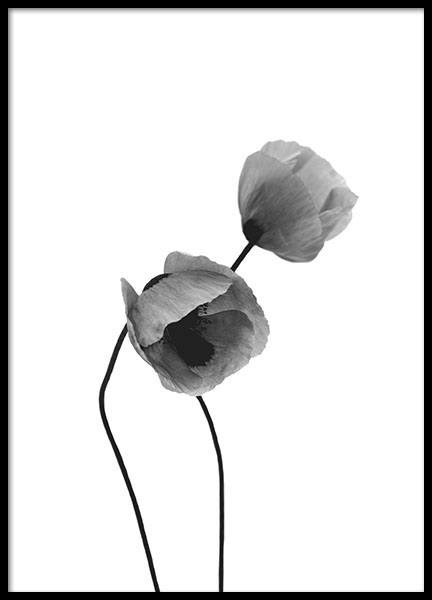 Grey Poppy Flowers, Poster in the group Prints / Black & white at Desenio AB (8631)