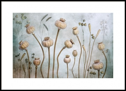 Papaver Poster in the group Prints / Photographs at Desenio AB (8679)