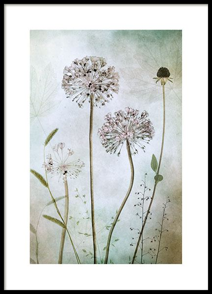 Allium poster in the group Prints / Sizes / 50x70cm | 20x28
