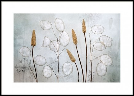 Lunaria Poster in the group Prints / Photographs at Desenio AB (8681)
