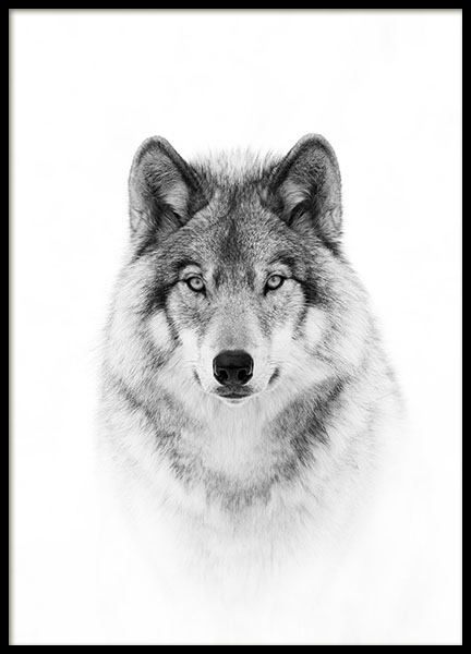 Wolf Poster in the group Prints / Animals at Desenio AB (8693)