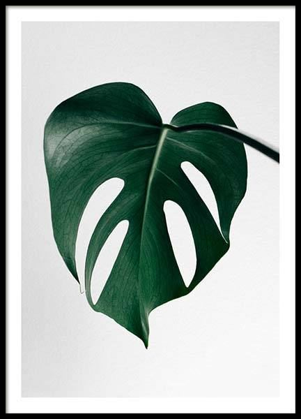 Monstera one Poster in the group Prints / Sizes / 50x70cm | 20x28