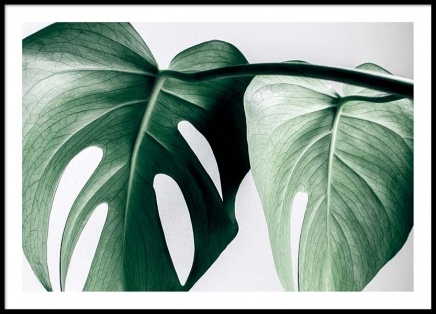 Monstera two Poster in the group Prints / Sizes / 50x70cm | 20x28 at Desenio AB (8721)