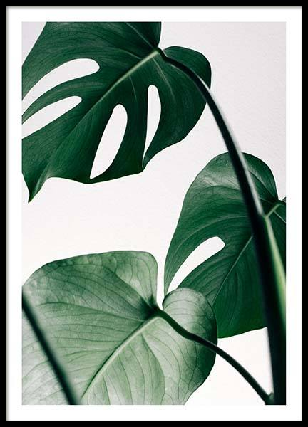 Monstera Three (21x30) in the group Prints / Floral at Desenio AB (8722-4)