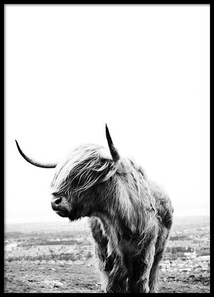 Highland cow Poster in the group Prints / Sizes / 40x50cm | 16x20 at Desenio AB (8825)