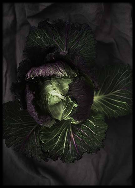 Cabbage Poster in the group Prints / Photographs at Desenio AB (8847)
