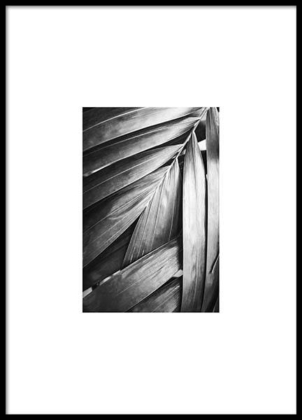 Palm Poster in the group Prints / Black & white at Desenio AB (8904)