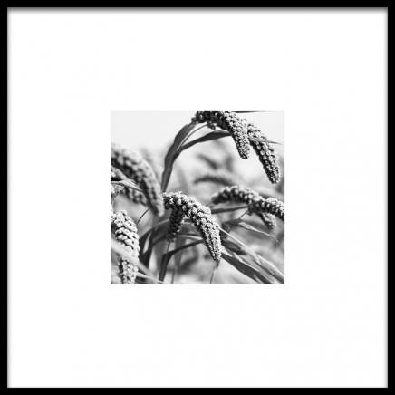Jungle Rice Poster in the group Prints / Black & white at Desenio AB (8911)