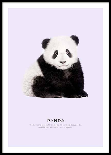 Panda Poster in the group Prints / Photographs at Desenio AB (8925)