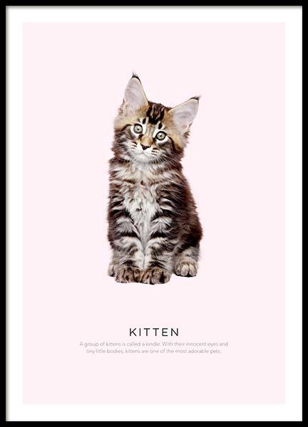 Kitten Poster in the group Prints / Kids wall art at Desenio AB (8927)