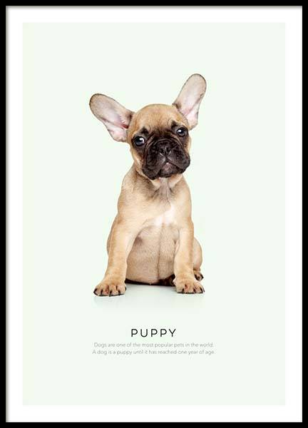 Puppy Poster in the group Prints / Sizes / 50x70cm | 20x28 at Desenio AB (8928)