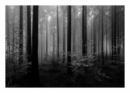 Forest Trees Poster in the group Prints / Nature at Desenio AB (8942)