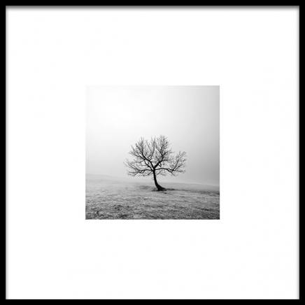 Tree Poster in the group Prints / Nature prints at Desenio AB (8953)