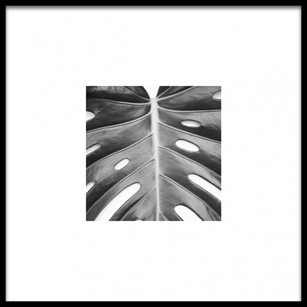 Monstera Deliciosa Poster in the group Prints / Black & white at Desenio AB (8955)