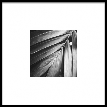 Palm Tree Leaf Poster in the group Prints / Floral at Desenio AB (8956)