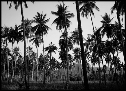 Coconut palms Poster in the group Prints / Sizes / 50x70cm | 20x28 at Desenio AB (8963)
