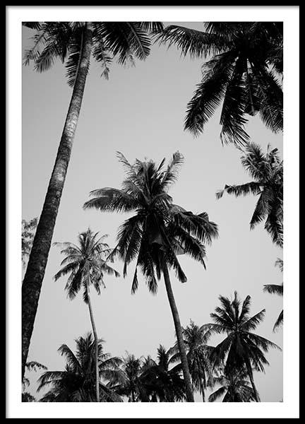 Palms Above Poster in the group Prints / Black & white at Desenio AB (8964)