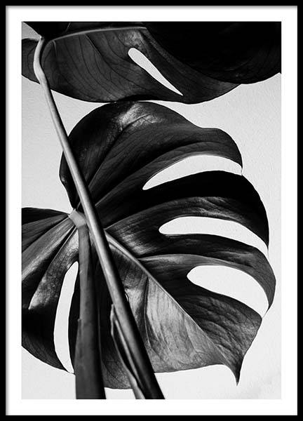 Monstera B&W One Poster in the group Prints / Photographs at Desenio AB (8972)